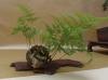 Kusamonai, suiseki, skulptūrėlės