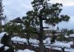 bonsai-002_0