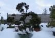 bonsai-003_0