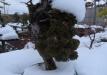 bonsai-007_0