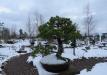 bonsai-015