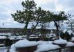 bonsai-022