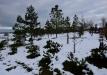 japoniskas-sodas-kretingos-rajone-026