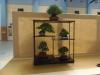 Pinus thunbergii, Juniperus chinensis, Cotoneaster, Berberis thunbergii, Acer palmatum, Pyracantha, meistras Bob van Ruitenbeek, Nyderlandai