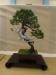 Juniperus sabina, meistras Gonzalo Saa, Prancuzija