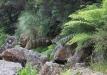 naujoji-zelandija-10