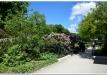 rododendrai-sereikiskese-2017-01