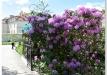 rododendrai-sereikiskese-2017-05