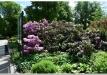 rododendrai-sereikiskese-2017-06