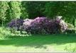 rododendrai-sereikiskese-2017-07
