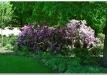 rododendrai-sereikiskese-2017-09