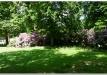 rododendrai-sereikiskese-2017-16