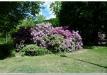 rododendrai-sereikiskese-2017-18