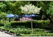rododendrai-sereikiskese-2017-25