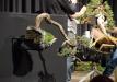 trophy2020_demonstracijos003