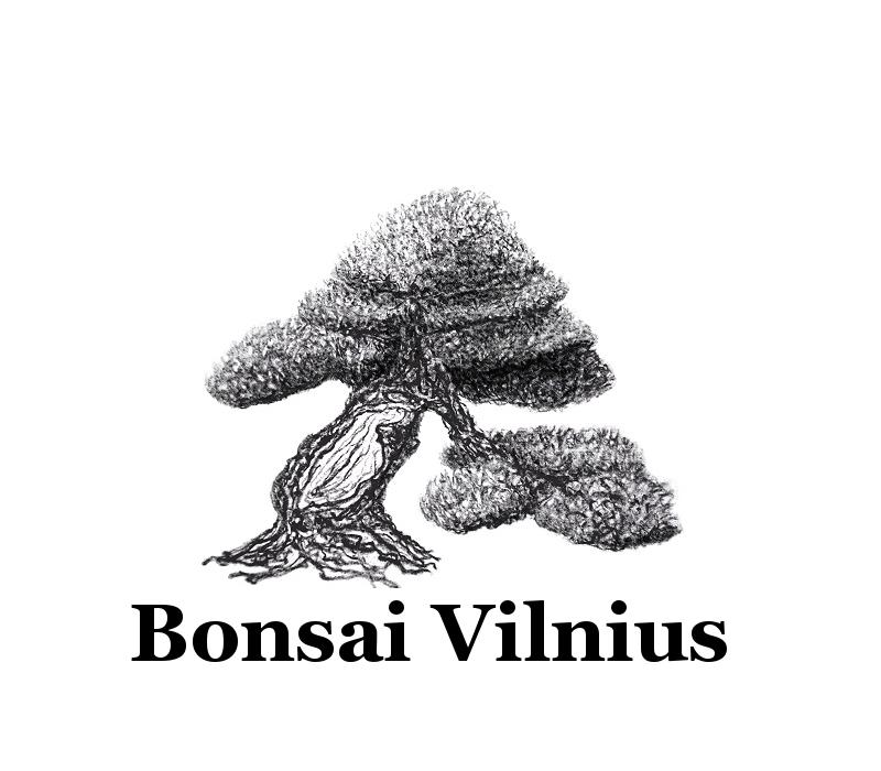 BV logo 2013-7