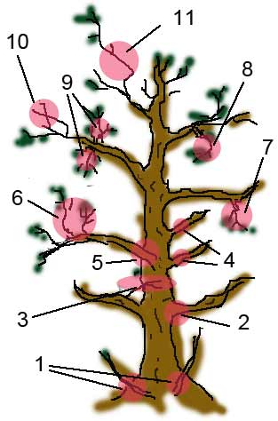 bonsai_branch_rule