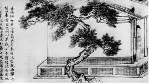 Senas medis