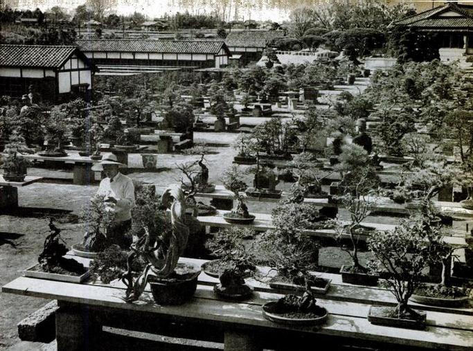 Keibun Tanaka sodas Japonijoje 1946 m.