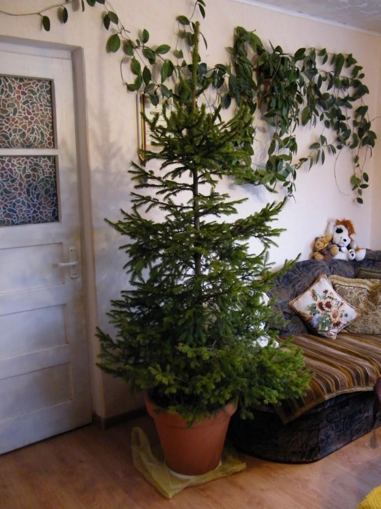 Kalėdų eglutė  2014 metų Kalėdos.
