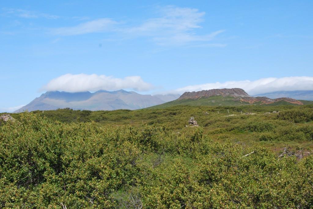 Islandiškas miškas