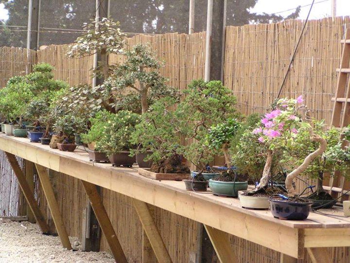Moshe Emergui garden