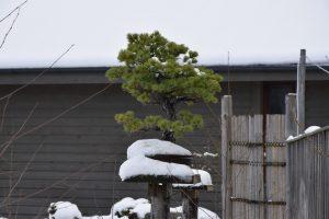 bonsai-002