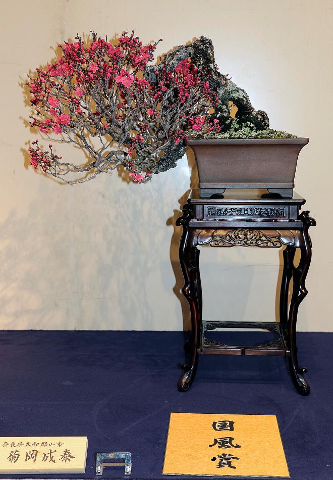 Kokufu Prize, 2016, Part 2: Japanese flowering apricot (Prunus mume)